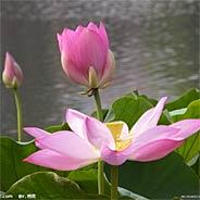 Bé Gái 16 Tuổi Niệm Phật Vãng Sanh [Audio]