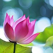 Biết Trước Ngày Giờ Niệm Phật Vãng Sanh Đứng 3 Ngày 2 Đêm [Video]