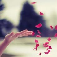 Buông Bỏ Vạn Duyên Để Niệm Phật Thì Có Thể Tự Tại Vãng Sanh