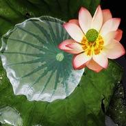 Chưa Từng Quy Y Tam Bảo Nhờ Niệm Phật Thuần Thục Được Vãng Sanh