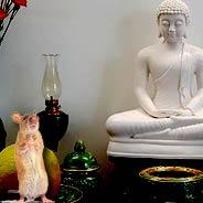 Chuột Vào Chánh Điện Niệm Phật Vãng Sanh [Video]