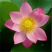 Quên Mình Xả Thân Vì Đại Chúng Và Lòng Tin Kiên Cố Vào Nguyện Lực Của Phật A Di Đà Đẩy Lùi Bệnh Ung Thư