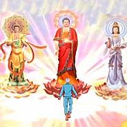 Chín Phẩm Sen Vàng Trong Pháp Môn Niệm Phật [Video]