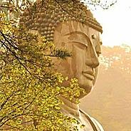 Biết Pháp Môn Tịnh Độ Mà Không Chịu Niệm Phật Là Đại Si Cuồng