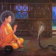 Cả Dòng Họ Nhà Rắn Niệm Phật Được Thoát Kiếp Rắn