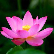 Cháu Bé 13 Tuổi Bệnh Ung Thư Niệm Phật 60 Ngày Vãng Sanh [Video]