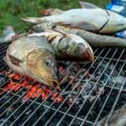 Hành Nghề Giết Cá Khi Chết Biến Hình Như Cá
