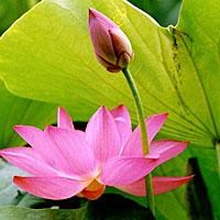 Khi Niệm Phật Thấy Hình Tượng Phật Có Lỗi Không?