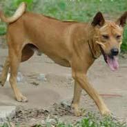 Lẩn Trốn Khắp Nơi Vẫn Không Tránh Được Nghiệp Báo:  Giết Chó Bị Chó Đến Báo Thù