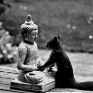 Lòng Ngã Mạn Quá Cao Không Tuân Lời Tổ Niệm Phật Cầu Sanh Tây Phương Lại Thích Nghiên Cứu Lung Tung Là Hạng Người 100% Rỗng Tuếch