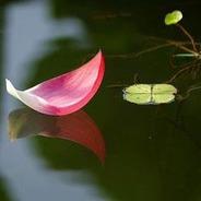 Mỗi Ngày Niệm 10 Câu Phật Hiệu Suốt 30 Năm Vãng Sanh Tịnh Độ