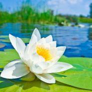 Những Chuyện Niệm Phật Kỳ Diệu Có Thật